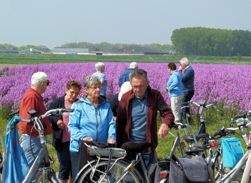 Op de voorgrond Rinus, Lenie, Kitty en Piet met op de achtergrond enkele deelnemers die naar het bloemenveld kijken