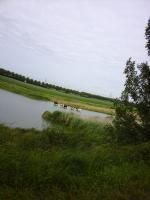 Wij, Brabanders, denken dat koeien altijd in een weiland lopen. In Zeeland is dat blijkbaar anders, daar ze staan in het water