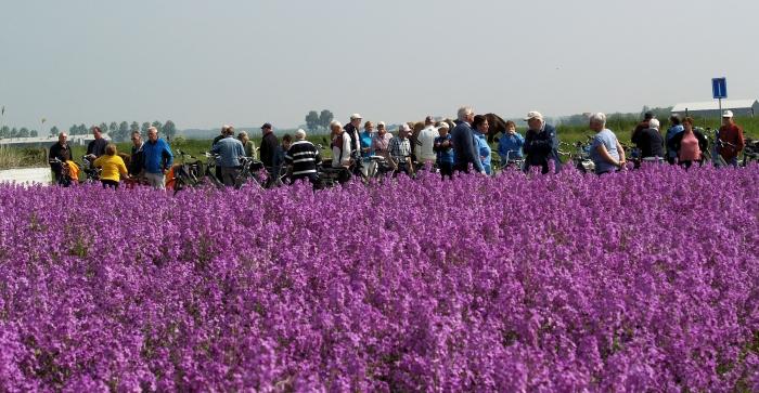 vudb-stop bij een veld vol met paarse bloemen